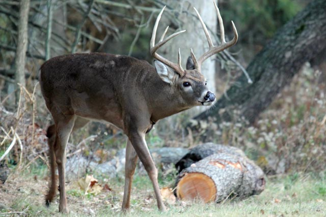 Heartland outdoors shootin whitetails first shed antler of 2011