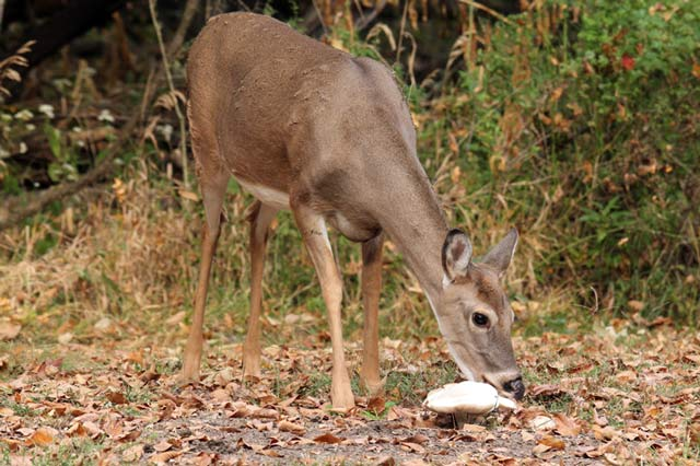 what can i feed the deer in my backyard 28 images what