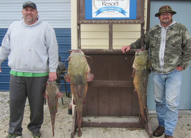 Jeff Timmerberg and Scott Backe caught these three Mark Twain flathead catfish weighing 63, 40 and 15 pounds. Photo courtesy of SOUTH FORK RESORT
