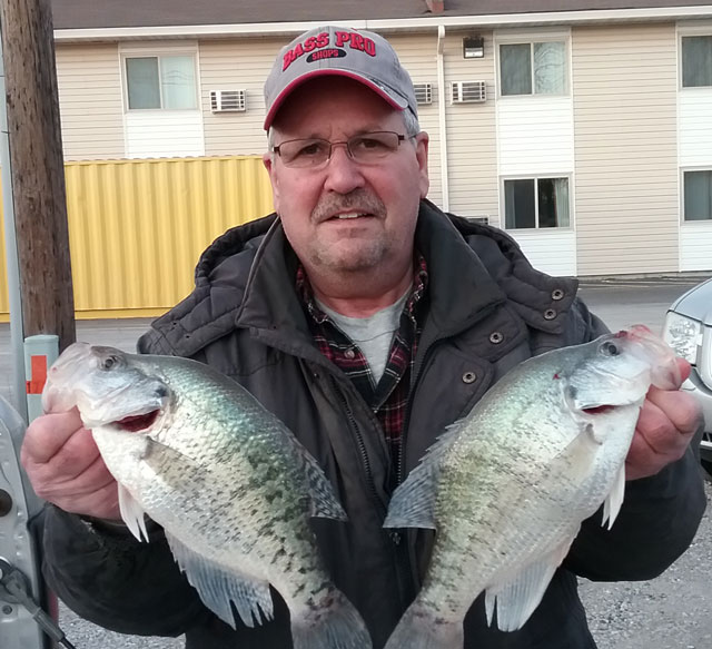 Joe Willis of Peoria caught these 14-inch crappie at a cooling lake in early February. He and a partner caught 30 crappie over 11 inches