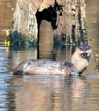 miss river otter