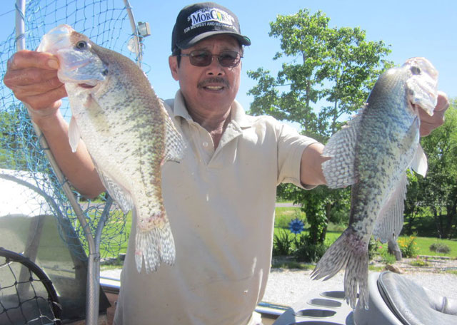 Martin Olivas hoists two nice Mark Twain Lake crappie from a limit he caught the morning of July 15. Photo courtesy of THE DRY DOCK