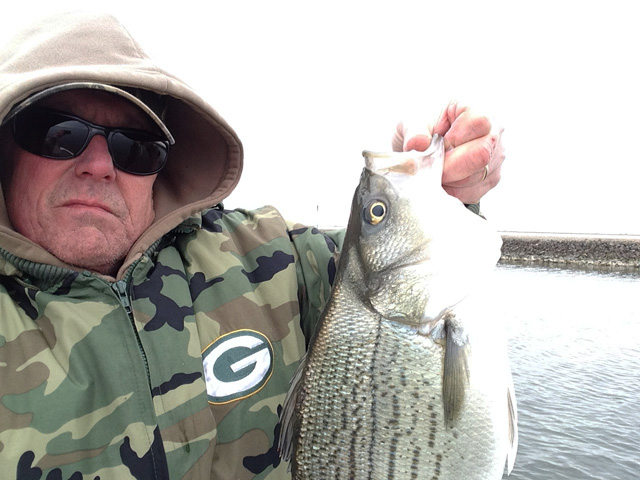 Man from Joliet caught this fat striper at LaSalle Lake on March 18.