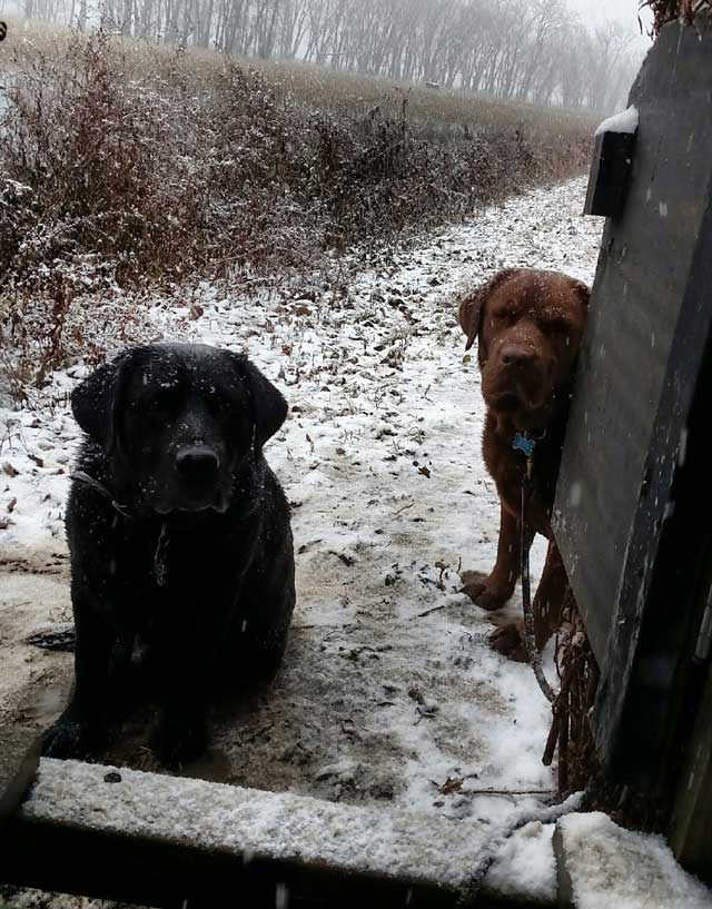 Moose and Bull wait for some ducks to drop at Paddock Gun Club last December