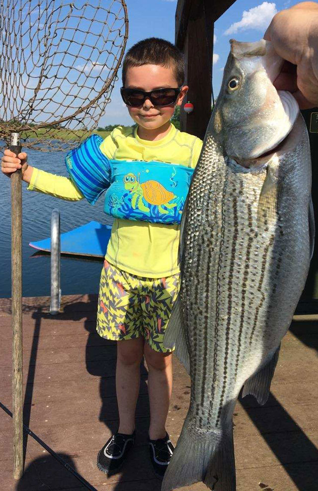 Sammy Blossom of Petersburg hooked into this striper in a lake near Fiatt. After battling the striper for awhile, Ssammy handed the fishing rod to his father, Reid Blossom, who is executive secretary of the Illinis Beef Association. Heartland Outdoors