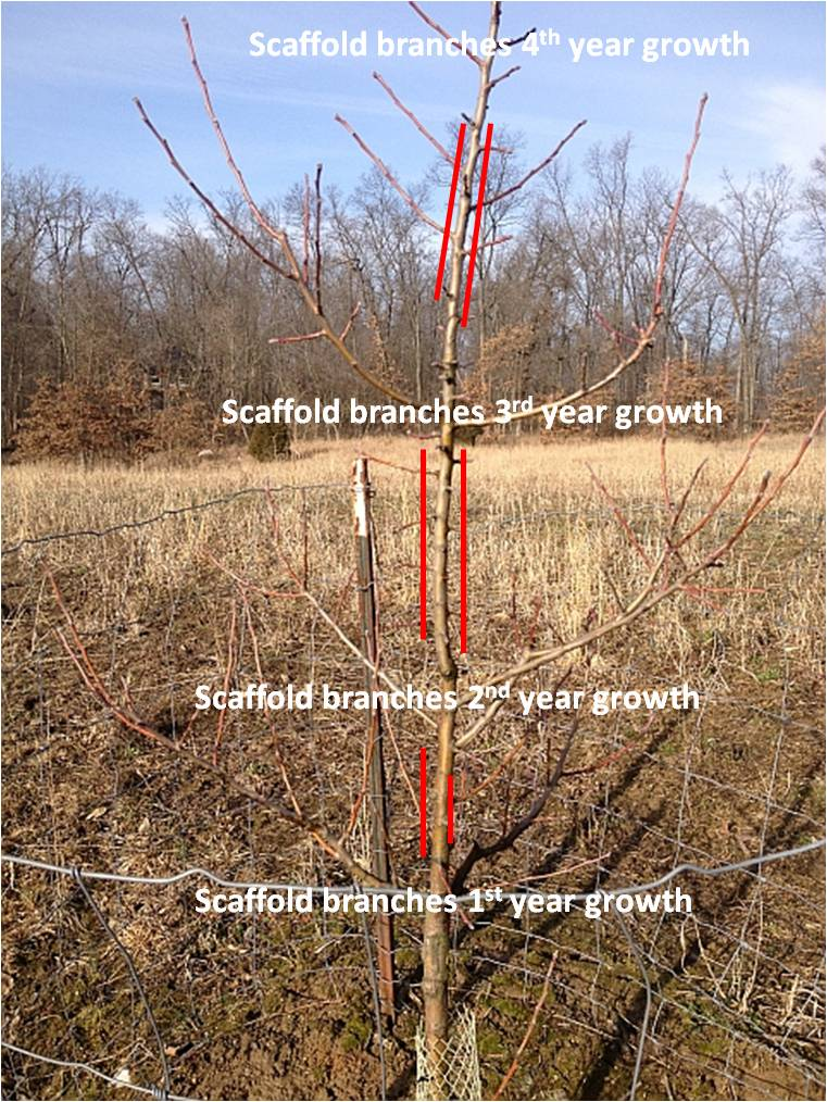 Heartland Outdoors Food Plotting Time To Prune Fruit Trees