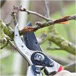 pruning fruit trees food plots