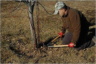 food plots orchard pruning