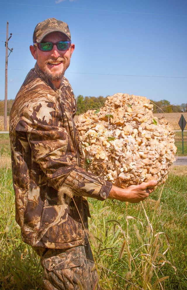 big hen of woods