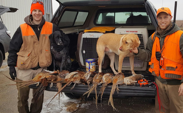 A group of Peoria hunters shot these nine pheasants and one rabbit on Dec. 11 at the Sibley Pheasant Habitat Area. Pictured is Shane Van Engen with Rogue (GSP) and Scott James with Janey (Lab). Also hunting were Luke Sheley, Mike Coe, and Hal Woo.