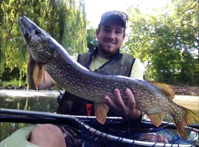 Tom Fallucca caught and released her on the Des Plaines River on August 30th, 2015 near Chicago. She measured 33 inches in length and had a full belly.