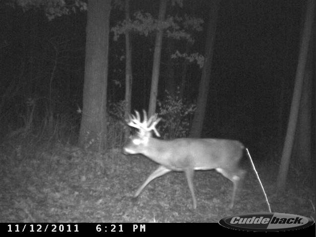lynch trail cam 2