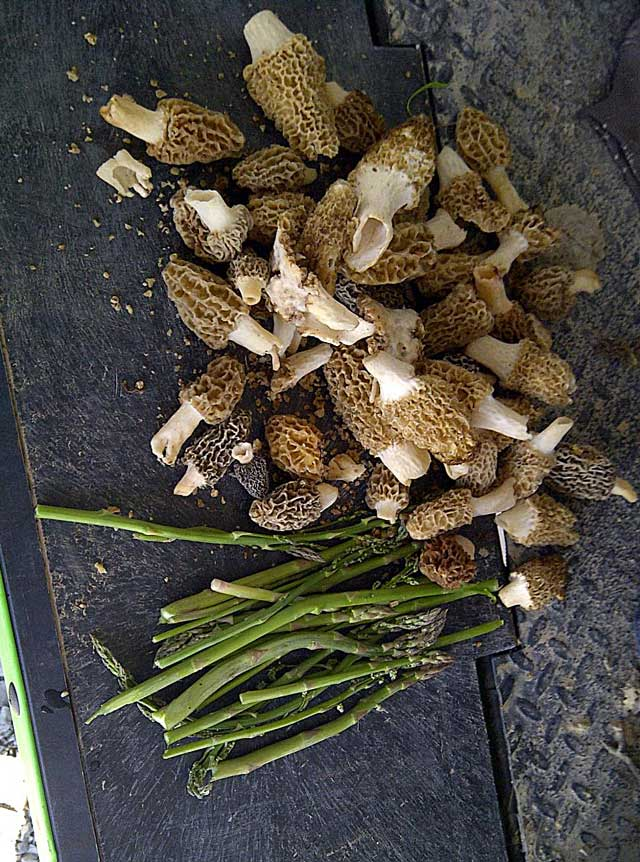 shrooms and sparagus