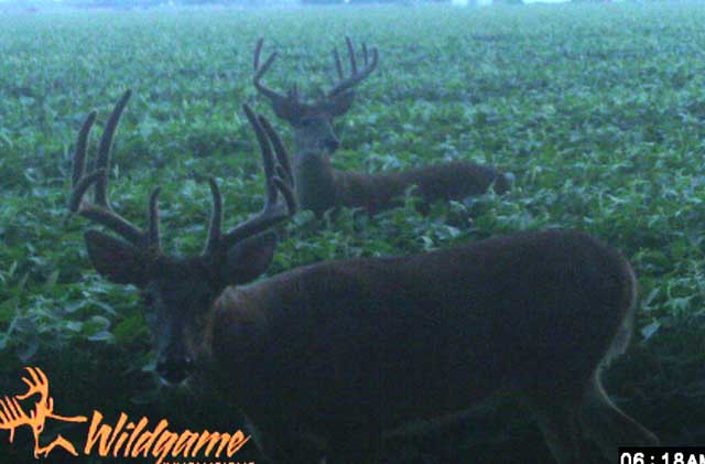 trail cam bucks