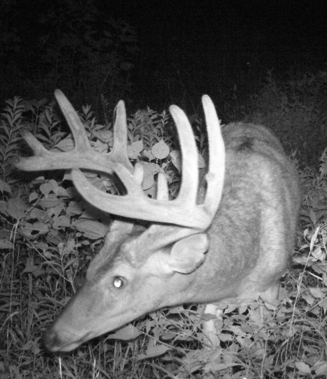 trail cam randolph county