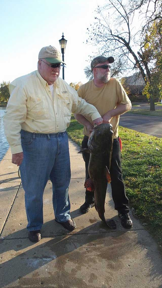 two men of Peoria caught a Flathead Catfish held by his son on light spinning gear and 6lb test line while fishing for trout in Oct. 2014 in Pekin, IL.
