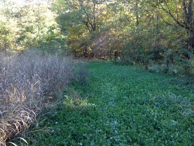 Heartland Outdoors :: Food Plotting :: Food plots: plan ...